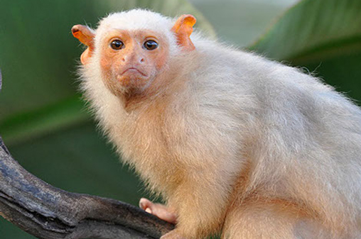 verdens mest truede dyreart